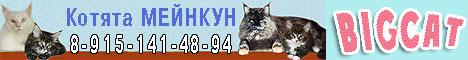 Мейн кун (котята) - питомник кошек Bigcat (Мэйн кун)