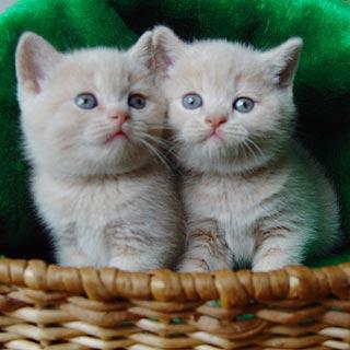 Котята настолько милы и непосредственны, что никто не